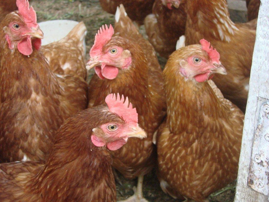 За год цены на яйца выросли практически в полтора раза