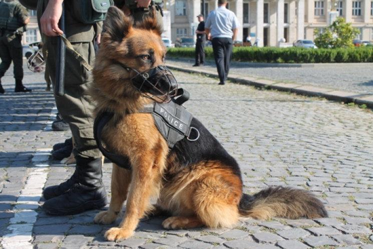 С 5 ноября крупные аэропорты Украины будут патрулировать кинологи