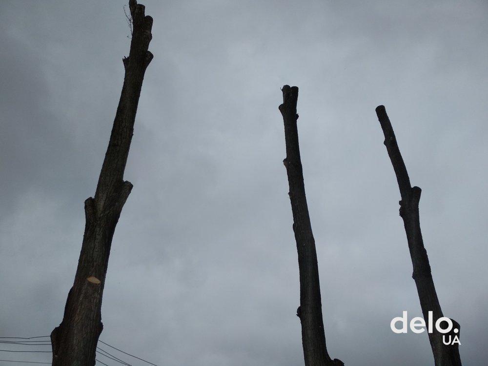 В Киеве на два года запретили обрезку деревьев