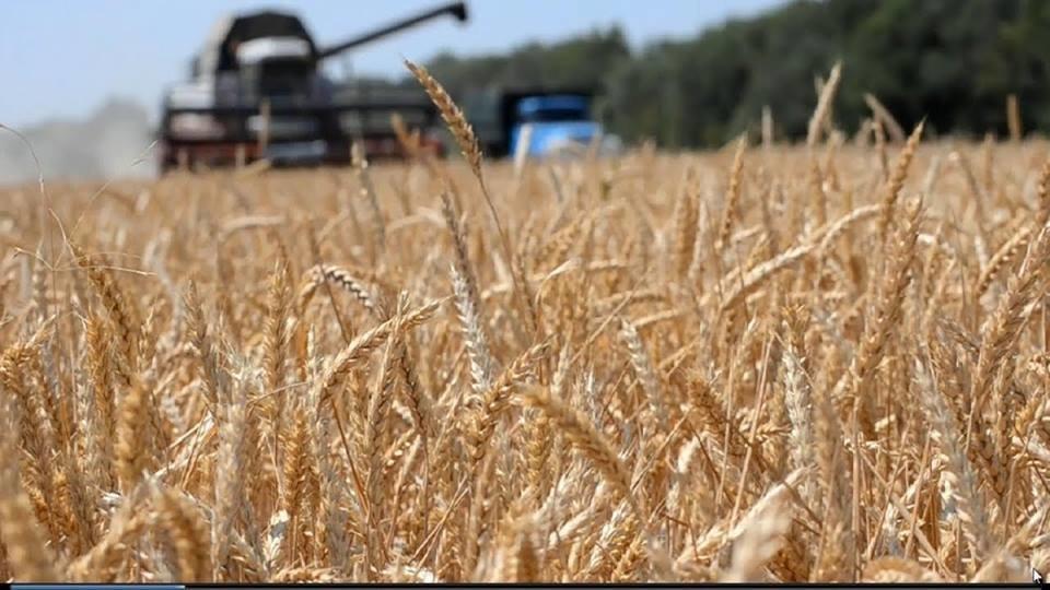 Аграрии в 2018 году получили более 4 млрд грн поддержки от государства