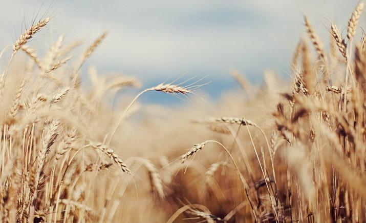 Порошенко подписал закон о продлении моратория на продажу с/х земли